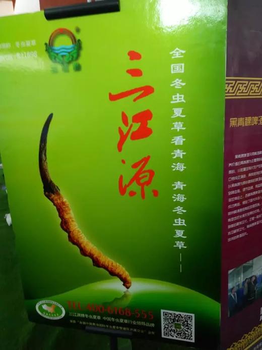 青洽会上的三江源-冬虫夏草 中国青海三江源冬虫夏草 Cordyceps sinensis